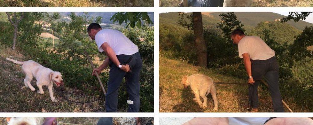 7 giorni nelle Marche e ricerca del tartufo con cane addestrato!